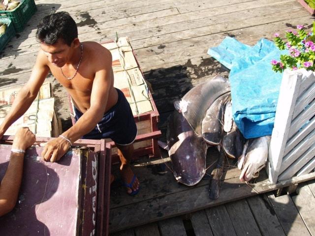 Chargement de poisson