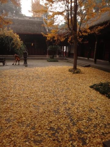 Feuilles de ginkgo au temple Wenshu.