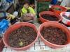 Choix de crevettes.
