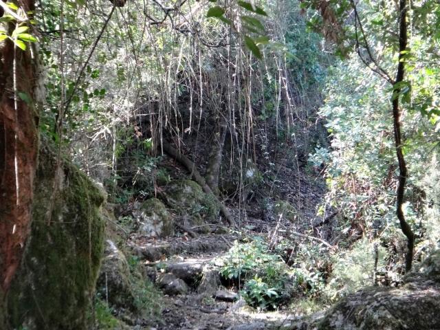 tunnel de ronces
