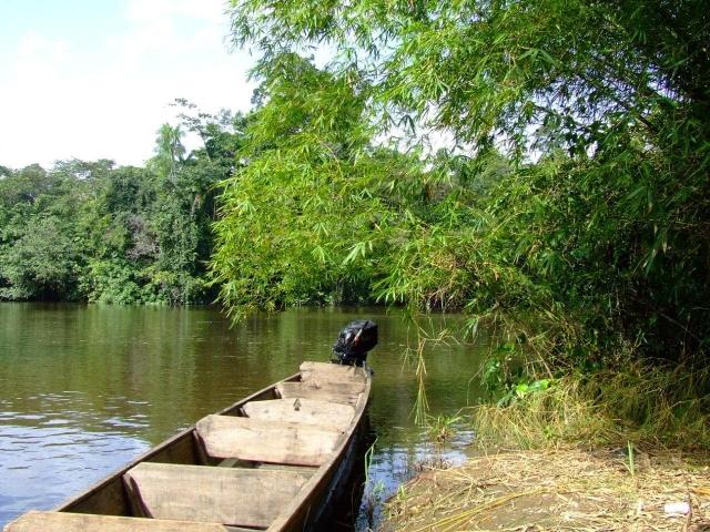 Vue sur le fleuve Kourou depuis la berge