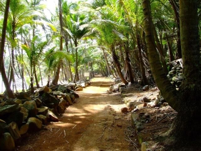 Chemin ombragé sur l'île Royale
