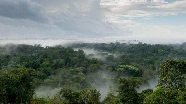 © G.FEUILLET/PARC AMAZONIEN DE GUYANE Brumes de lever du jour sur la canopée