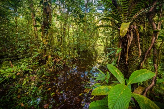(Crédit : Parc national amazonien de Guyane)