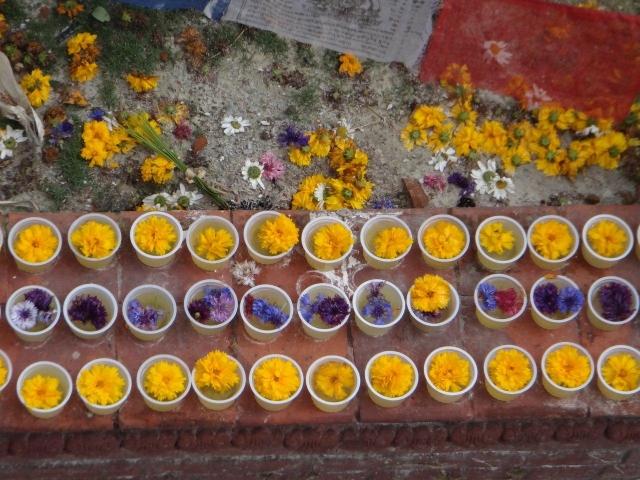 Fleurs à Boudhanath