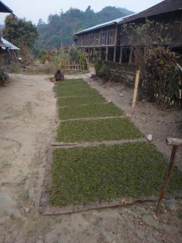 Séchage des feuilles de thé.