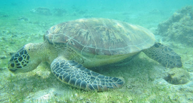 tortue lagon mayotte