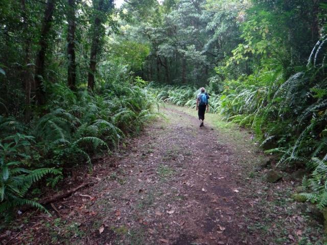 Sentier vers le gite de basse vallée