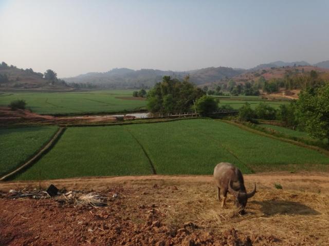 En direction du village de Puttu