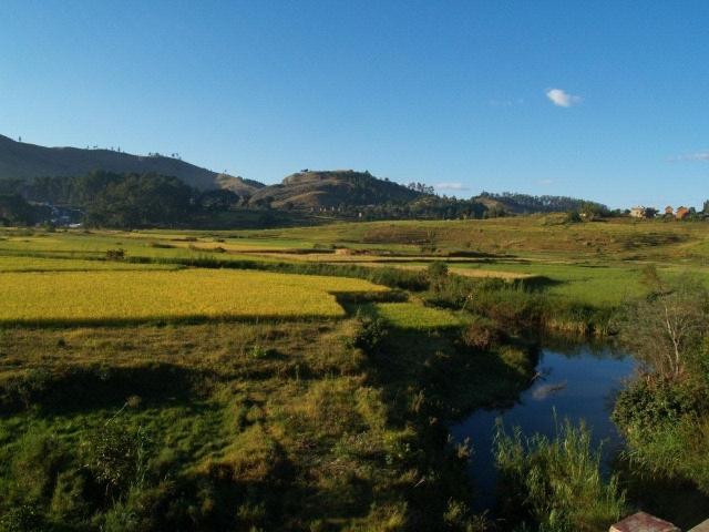 rizières malgache