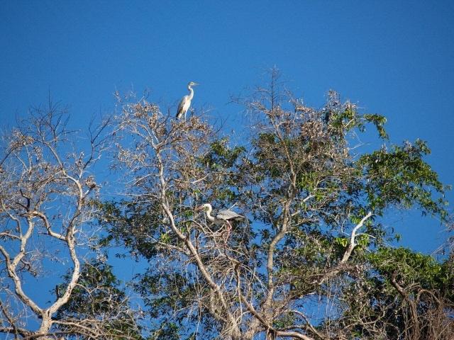 oiseau sur la tsiribihina